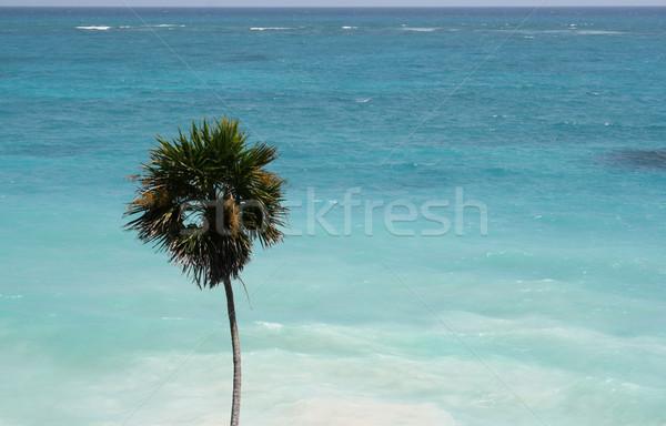 Tropical beira-mar palmeira tiro belo Foto stock © ca2hill