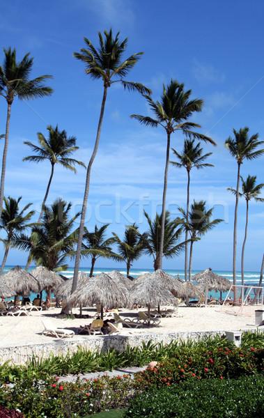 Stunning Punta Cana Beach Stock photo © ca2hill