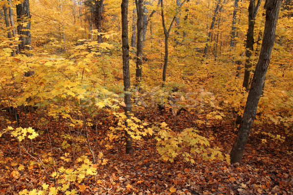 Full Fall Color Stock photo © ca2hill