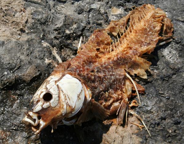 Dead Fish Carcass Stock photo © ca2hill