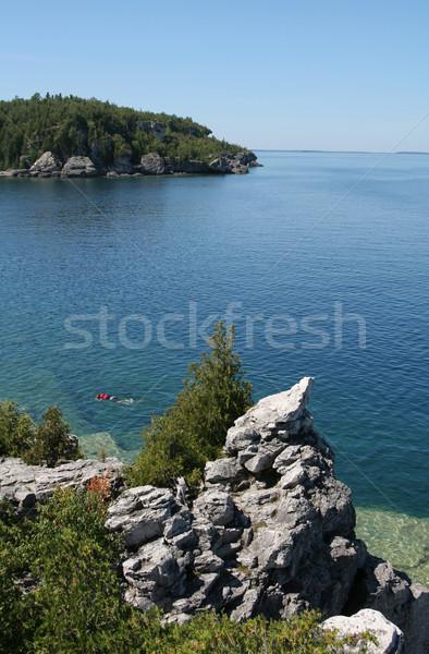 Cyprys jezioro widoku górę Zdjęcia stock © ca2hill