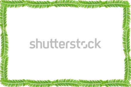 Hojas verdes marco blanco espacio de la copia árbol hierba Foto stock © caimacanul
