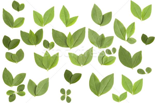 Elöl kilátás különböző forma levelek fehér Stock fotó © caimacanul