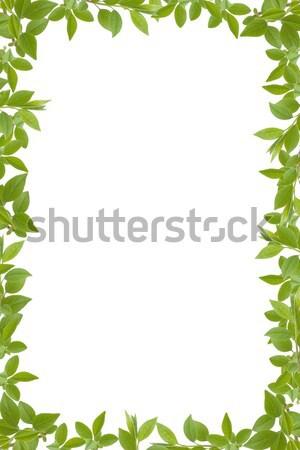 green leaves frame  Stock photo © caimacanul