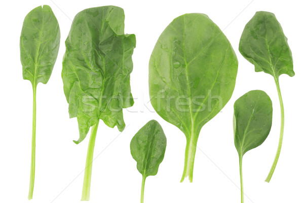 ifferent shape of fresh spinach Stock photo © caimacanul