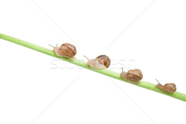 家族 カタツムリ 登山 緑 スティック 家 ストックフォト © caimacanul