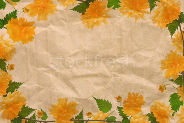 Stock fotó: Sárga · virág · keret · virágzik · zöld · levelek · virágok · tavasz