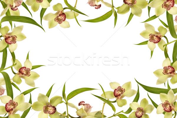Stok fotoğraf: Orkide · çiçek · bahar · çerçeve · yeşil · yaprakları · zaman