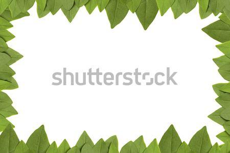 Zöld levelek keret fehér copy space fa fű Stock fotó © caimacanul