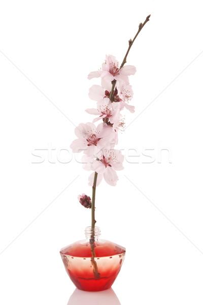 Perfume garrafa cereja flor branco vidro Foto stock © caimacanul