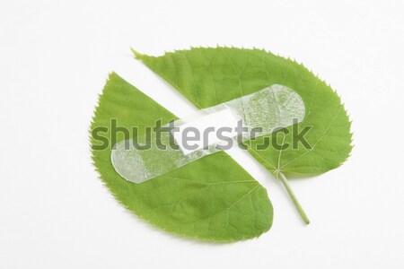 окружающий здоровья среде защиту зеленый лист белый Сток-фото © caimacanul