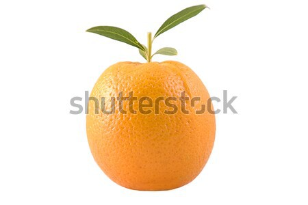 Narancs levelek elöl kilátás zöld levelek étel Stock fotó © caimacanul