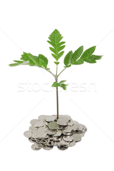 ストックフォト: 緑 · 工場 · 成長 · コイン · お金 · 金融