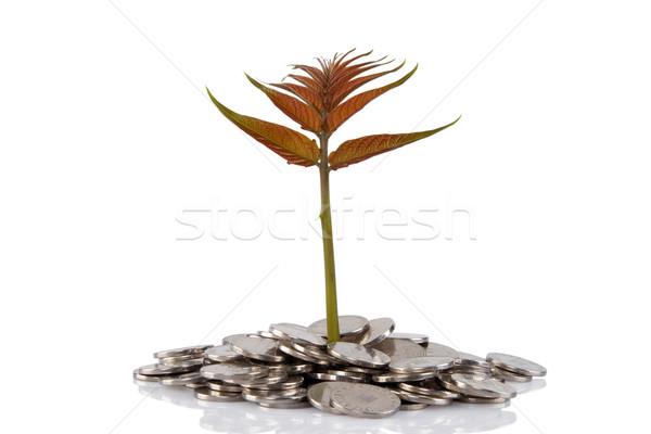új növény növekvő érmék pénz pénzügyi Stock fotó © caimacanul