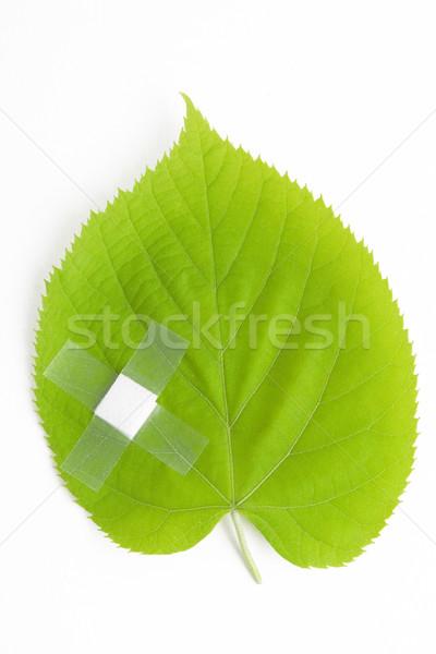 green leaf bandaged Stock photo © caimacanul
