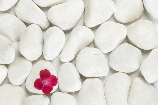 red petals on white pebble background Stock photo © caimacanul