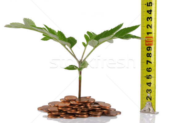concept for business growth Stock photo © caimacanul