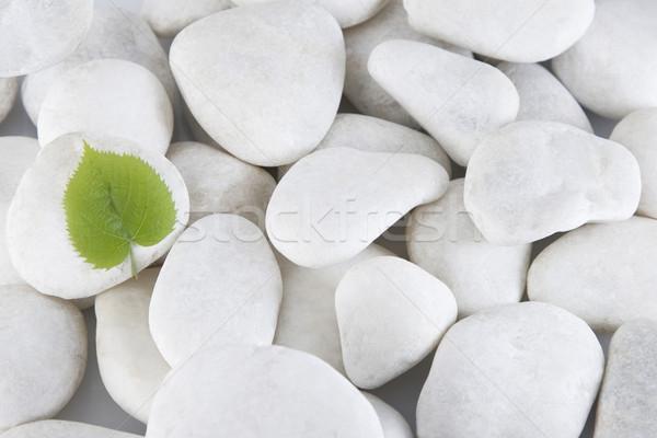 Blanco piedras hoja verde frente vista fondo Foto stock © caimacanul