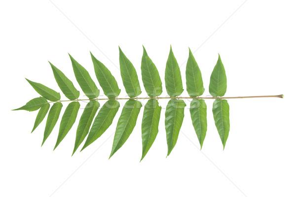 Photo stock: Vue · vert · forêt · design · feuille