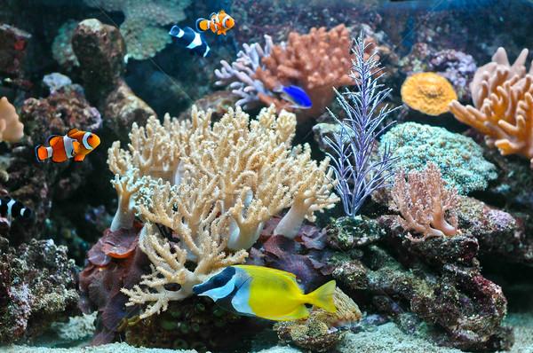 Aquarium tropicales eau poissons résumé Photo stock © Calek