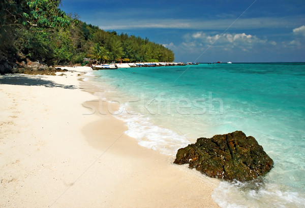 Bamboe eiland strand boom zee palm Stockfoto © Calek