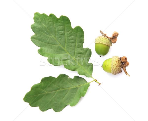 дерево продовольствие солнце лист зеленый осень Сток-фото © Calek
