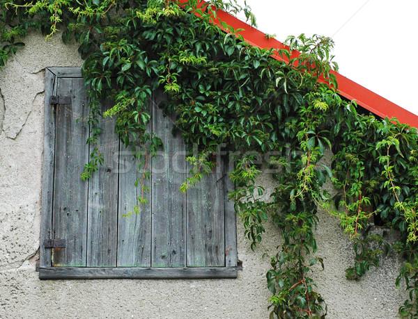 Lierre bois porte terres bâtiment mur Photo stock © Calek