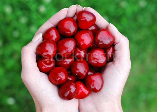 Kirschen Hand voll Wasser Essen Obst Stock foto © Calek