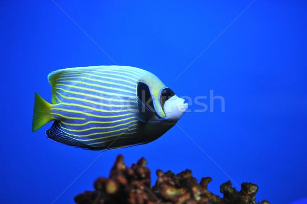 Fish Stock photo © Calek