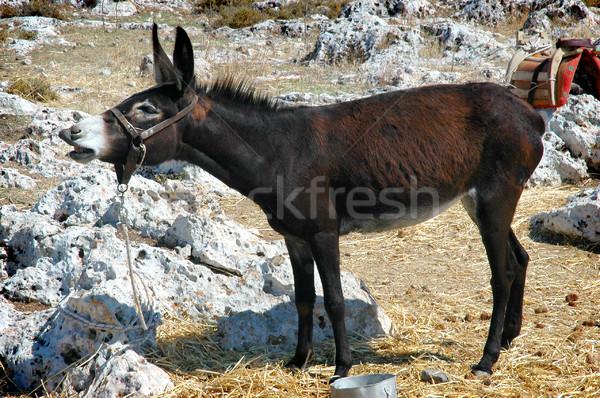 Burro viajar fazenda escuro férias grego Foto stock © Calek
