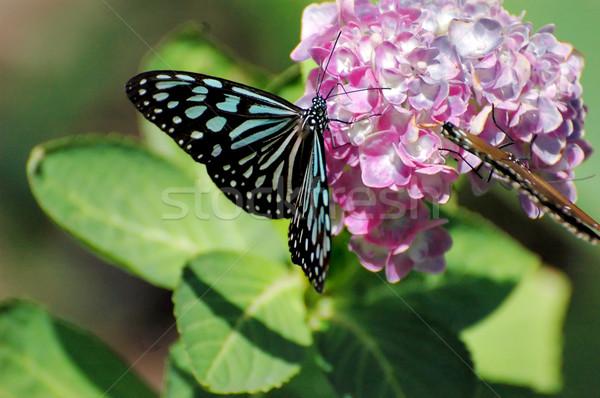 Vlinder vergadering bloem voorjaar gras hout Stockfoto © Calek