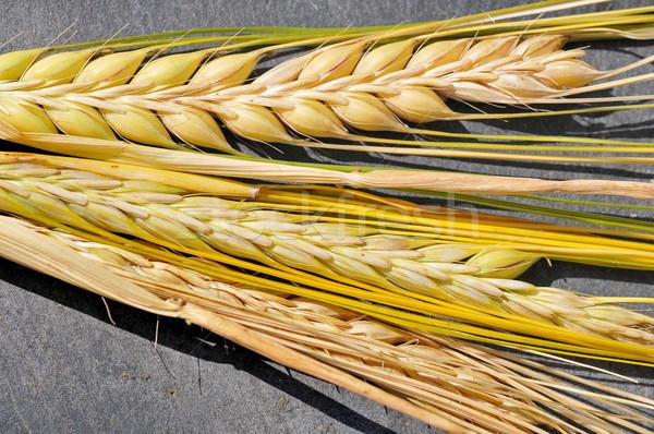 Arpa ayrıntılı görüntü olgun gıda dizayn Stok fotoğraf © Calek