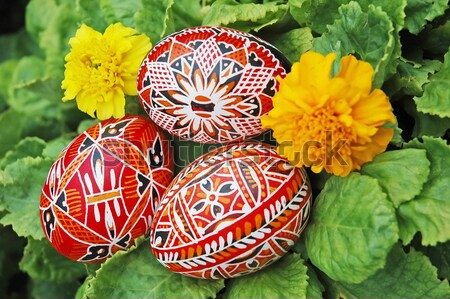 Eggs and flower Stock photo © Calek