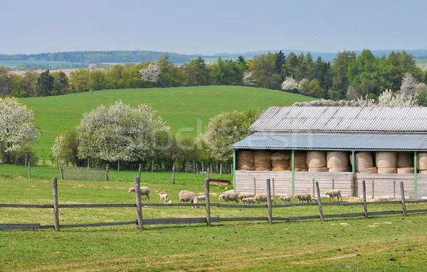 The ranch Stock photo © Calek