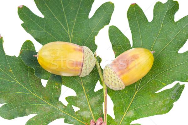 ストックフォト: 食品 · 自然 · 緑 · 葉 · 秋 · 色