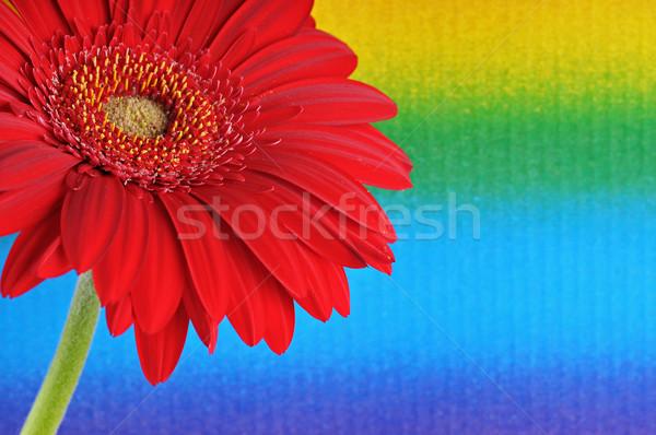 Kleuren detail bloem voorjaar ontwerp achtergrond Stockfoto © Calek