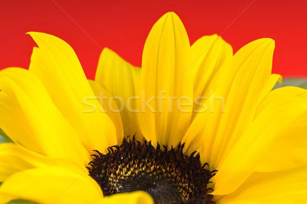 Napraforgó részlet levelek piros tavasz absztrakt Stock fotó © Calek