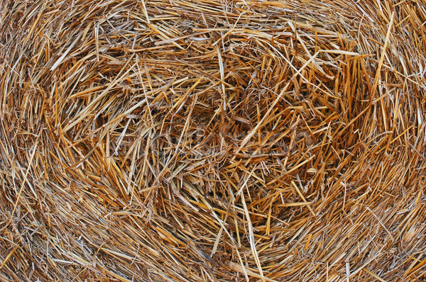 Straw Stock photo © Calek