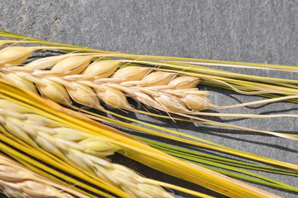Cevada detalhado imagem maduro comida natureza Foto stock © Calek