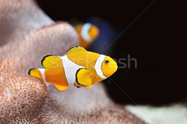 Fish Stock photo © Calek