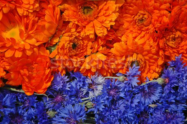 Marigold and cornflower Stock photo © Calek