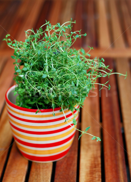 Thyme Stock photo © Calek