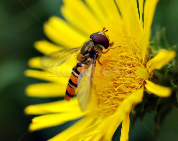 Wesp klein gele bloem natuur dier honing Stockfoto © Calek