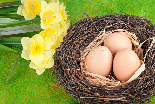 Eieren nest groene natuur ontwerp ei Stockfoto © Calek