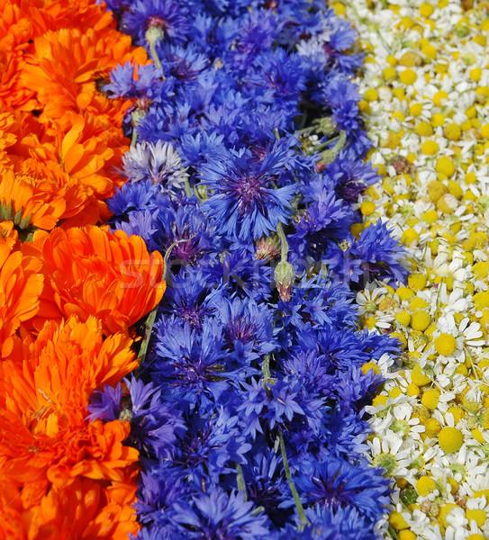Marigold,cornflower,chamomile Stock photo © Calek