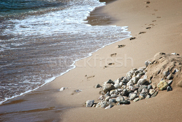 Footsteps Stock photo © Calek