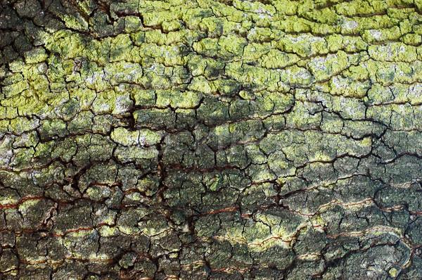 Ugatás fa fa erdő absztrakt zöld Stock fotó © Calek