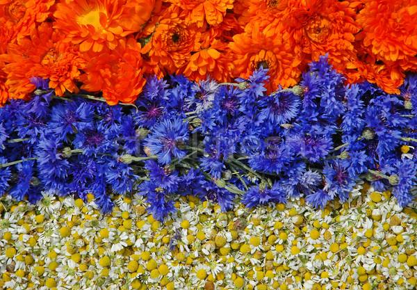Marigold, bluebottle and chamomile Stock photo © Calek