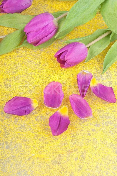 çiçek mor lale sarı Paskalya doğa Stok fotoğraf © Calek