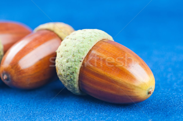 żołądź niebieski tekstury drewna charakter owoców Zdjęcia stock © Calek